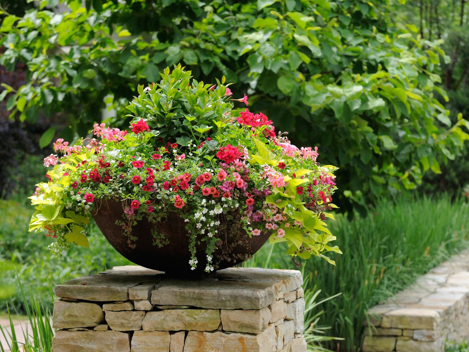 Цветы нашего сада на клумбах своими руками