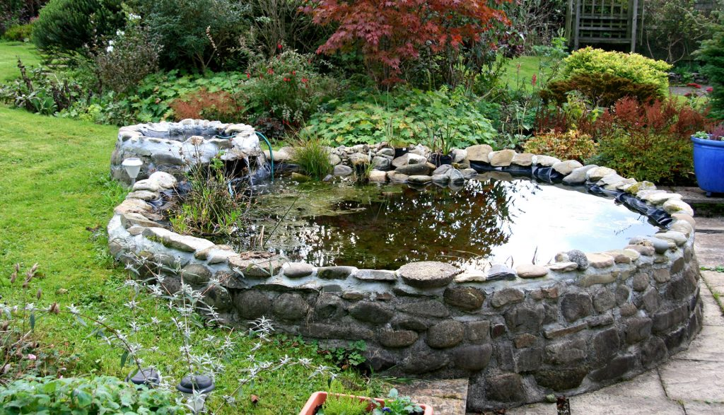 small-pond-04431