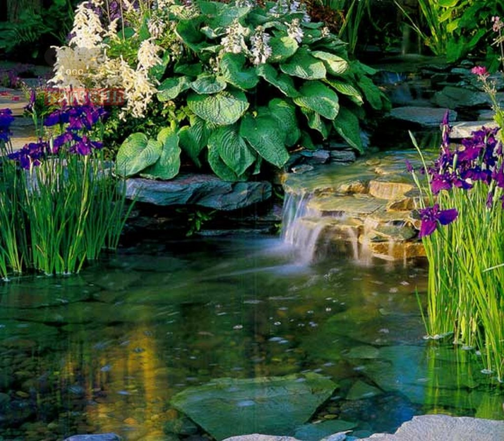 small-pond-08761