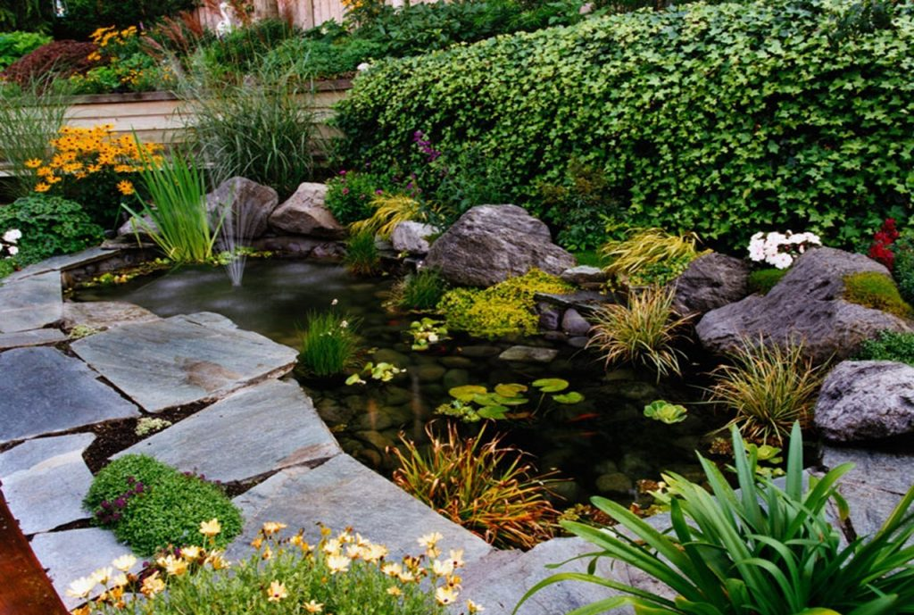 small-pond-4433221