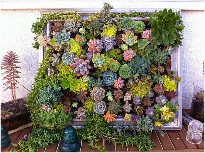 17 оригинални идеи за създаване на вертикална градина декориране на апартамент или къща страна