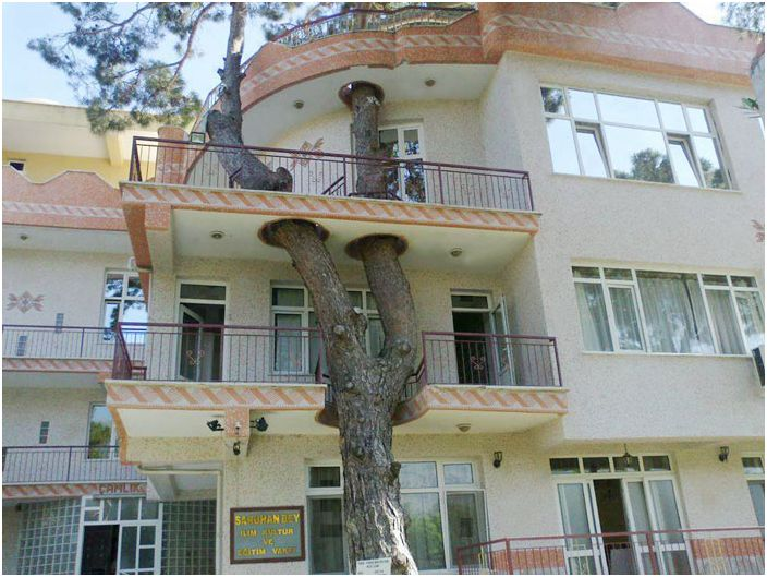 Първо имаше дървото: 5 страхотни примери за това как да се изгради сграда без увреждане на дървото