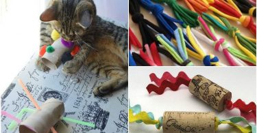 13 best toys for cats, which can quickly make your own hands