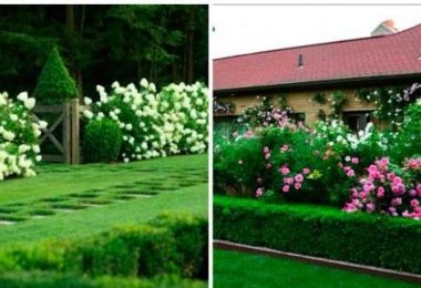 Hedges in landscape design