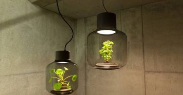 Glass fixtures with live plants inside from Nui studio