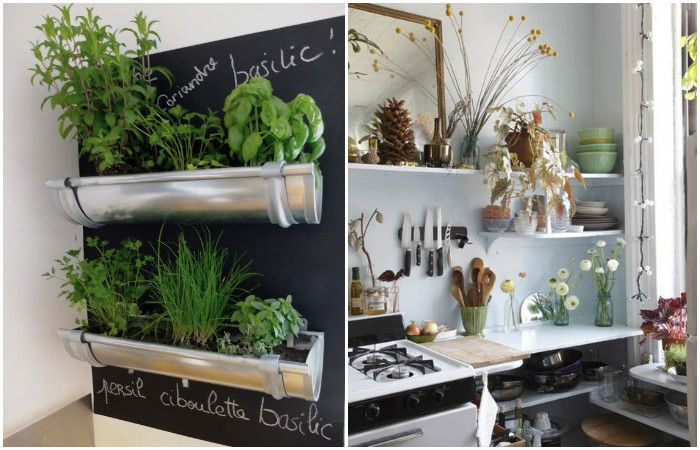 Plants enliven the interior of a small kitchen.