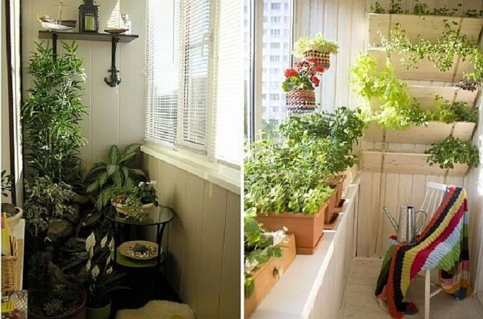 Successful examples of the transformation of the balcony in the mini-garden.