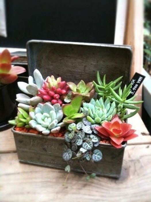 One of the best mini-garden design at home, which will be a highlight.