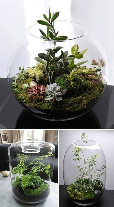 Cool option to create a mini-garden in a vase, what could be better.