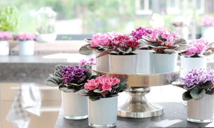 On the shelves is possible to place a cute mini garden, perhaps the best solution for interior decoration.