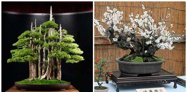 Plateau-like form of bonsai