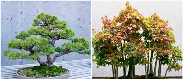 Multilateral form of bonsai