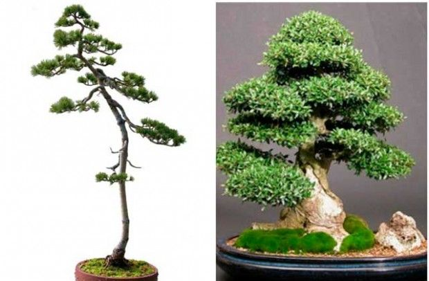 The literary form of bonsai