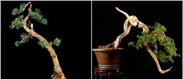 The cascade form of bonsai
