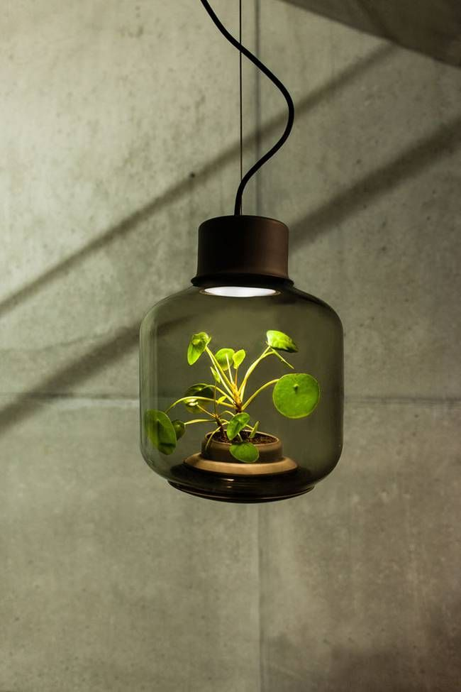 Floor glass lamp with a plant inside