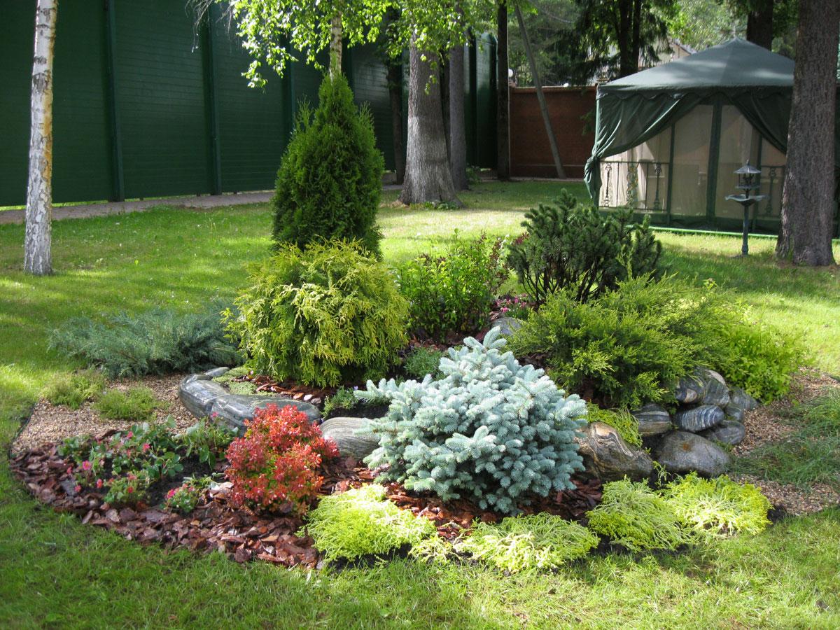 Как сделать сад из хвойников